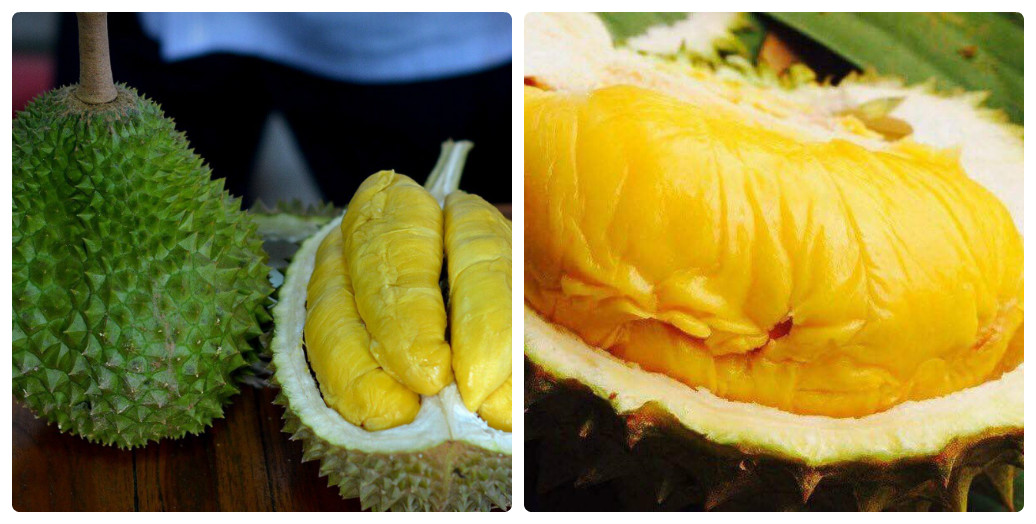 bán cây giống sầu riêng Musang King