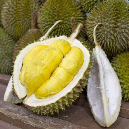 Làm giàu từ giống cây sầu riêng Ri6