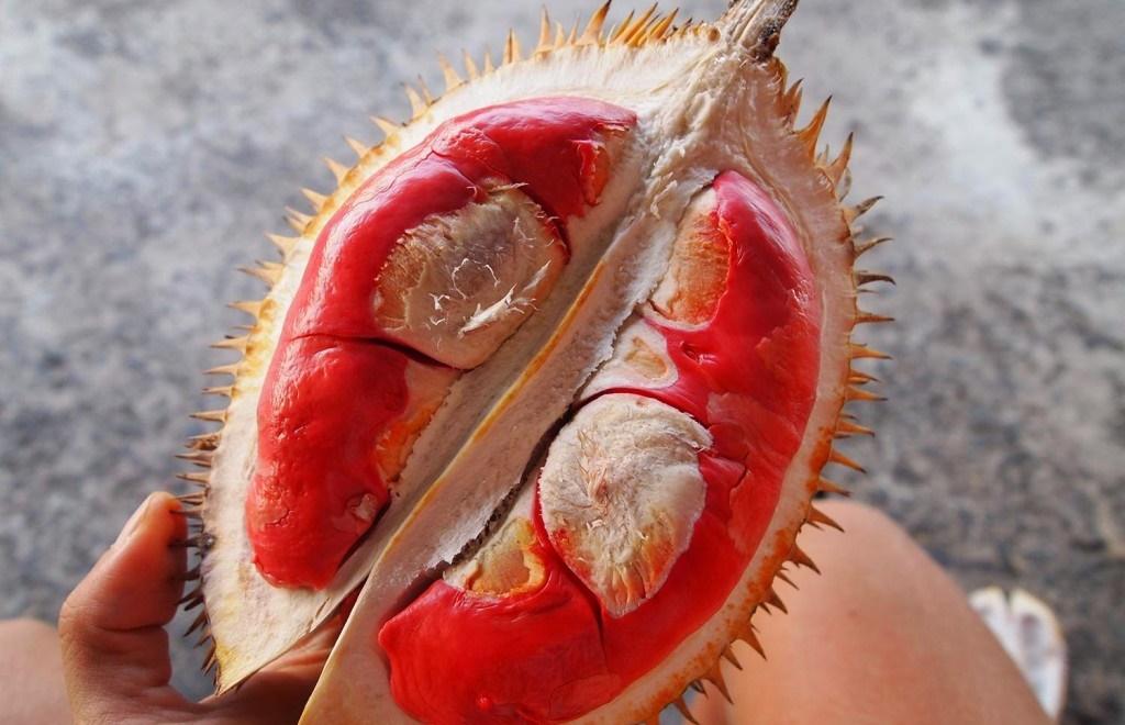 giống sầu riêng ruột đỏ