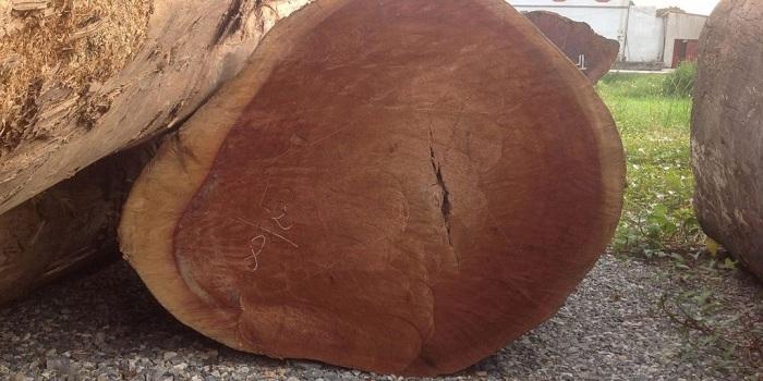 gỗ dổi