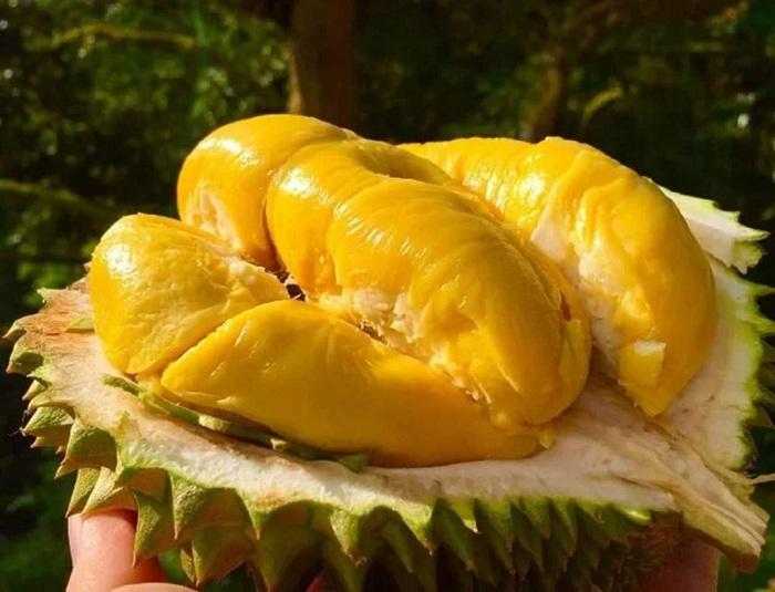 sầu riêng Musang King