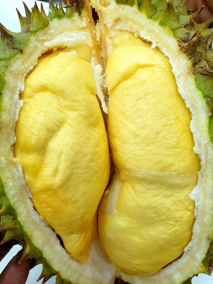 sầu riêng ri6 cơm vàng hạt lép
