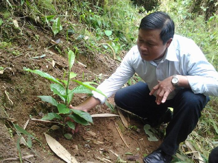 kỹ thuật trồng cây dỗi xanh